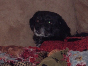 Sailor - Cuddled on the sofa on her last earthly day